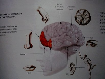 cerveaux2.jpg