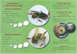 aaafreloncycle-300x212 FRELON - insectes - danger animal - allergie - protection dans Catastrophes
