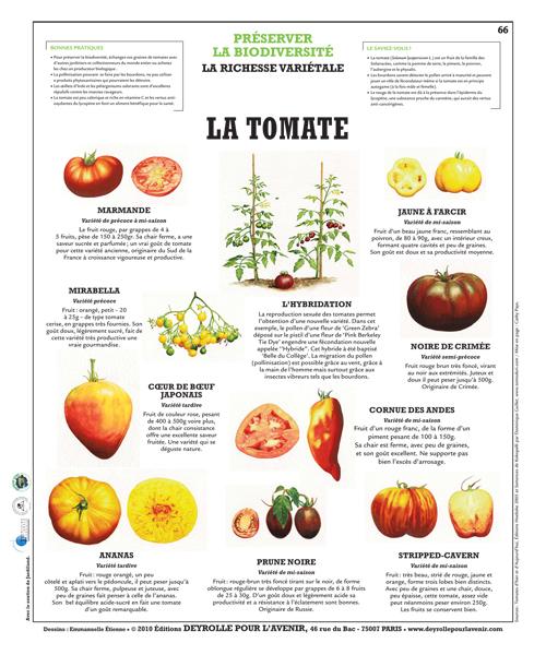 2013 avril archive at je me souviens - Tomate est un fruit ...
